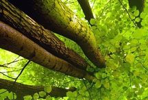 Green adoration