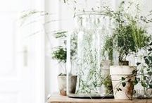 P L A N T S / Plants, succulents and terrariums. Greenery of the indoor variety.