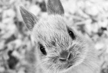 ~Conigli~ / Foto di questi dolcissimi animali❤️