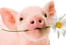 ~Pigs~ / Immagini di questi dolcissimi animali