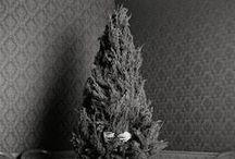CHRISTMAS TREES / Christmas Trees