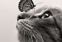 Gatos / Ideas para gatos