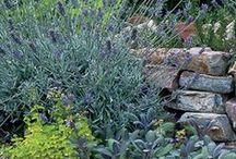 Kitchen & Garden / Recipes and gardening tips.
