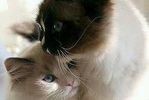 Cat lover ❤️