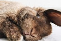 | Bunnies & Guinea pigs |