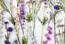living herbarium