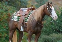 Riding / I inspire to have a horse but i want to make sure I can take proper care of it!