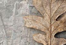 Autumn TIME. ITALIANBARK