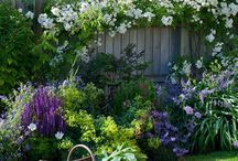 My cottage garden / -