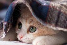 Cuddly kitten / L'amore di un amicio ti riempie il ❤️