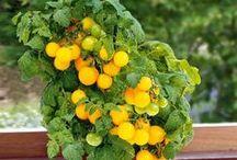 Gardening Ideas / Gardening ~ Trees, Flowers, Herbs and Ideas