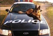 Dogs with a job / True Heroes