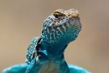 amphibians and reptiles / by Steve Forrest
