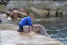 Dolfinarium Harderwijk / Fotografie: Son Simonis. Dolfijnen, walrussen, zeeleeuwen en zeehonden. Afbeeldingen stelen is zo zielig en simpel, ga zelf eens met uw camera aan de slag!