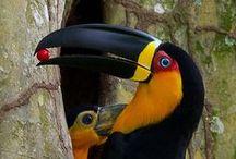 birds 2 / by Steve Forrest