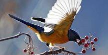 *-* I LOVE BIRDS *-*