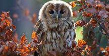 *-*CUTE OWLS*-*