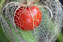 Tohum  çekirdek ve kökten bitki yetiştirme