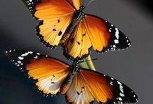 Fluttershys