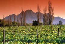 Cape Winelands / Here we share all the beauty of the Cape Winelands and what it offers