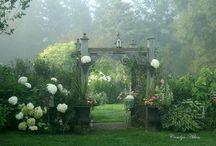 Flowers/Gardens / by Nikki Salcedo