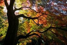 Trees / by Jay Leelee