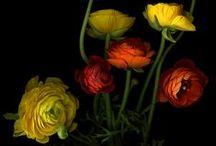 Bloemen / Bloemen Fleur Flowers Blumen