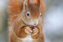 Squirrels!!!!!