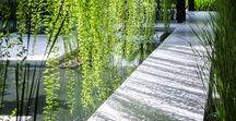 Plant Life / Plant life inspiration