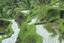 Indonésie / Bali / Tableau d'inspiration pour voyager en Espagne