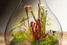 Roślinne terrarium