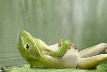 Yoga Mantra Meditation
