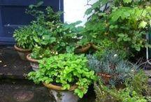 • Garden •