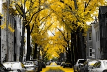 otoño | invierno