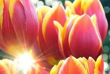 flowers / çiçekler