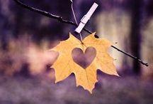 Autumn & Leaves
