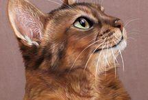 Котики в рисунках