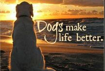 It's A Dogs Life / by Becky Dulin