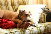 I heart Dachshunds
