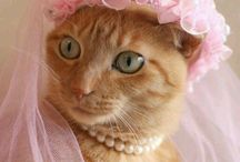 Kitty Dress Up / Costuming for Cats