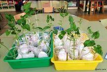 Proyecto Plantamos una judía  (Las Plantas) - We grow a bean