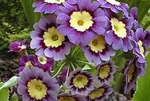 Pretty Plants #bestflowers / Plants I want, plants that grow well, plant portraits / by Ilona's Garden
