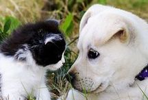 Animaux - chats et chiens