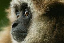 Animals - Monkeys / by Britta