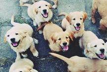 CUTE || PUPPIES