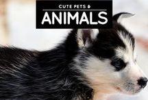 » Pets & Animals / One word: CUTEEEEE