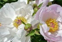 Flowers beautiful / by Wilda Alford