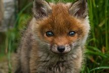 Wild Kingdom / Animals