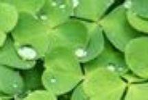 Boa sorte! / Opções de presentes para desejar `boa sorte` à uma pessoa querida!