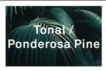 Tonal / Ponderosa Pine / Green / LNDR
